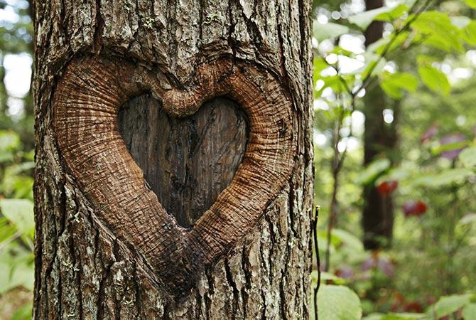 Baum mit Herz im Wald   Symbolbild   Oberhof Hotel Urlaub im Thüringenschanze